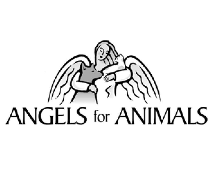 1angels-900x750